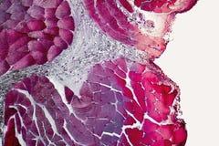 Organes microscopiques de cou photographie stock libre de droits