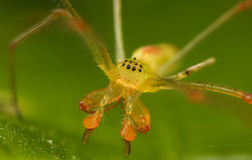 Organge yellow spider Stock Photo
