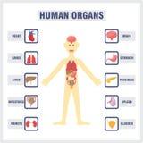 Organi interni umani royalty illustrazione gratis