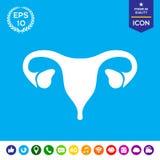 Organi umani Icona femminile dell'utero Fotografie Stock Libere da Diritti