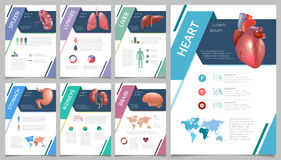 Organi umani interni infographic Fotografia Stock Libera da Diritti