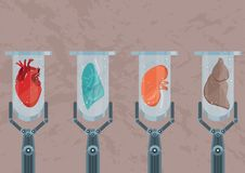 Organi umani laboratorio-crescenti sintetico Futuro di medicina e di trapianto illustrazione vettoriale