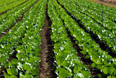 Organic agriculture Stock Images