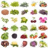 Organic agriculture Royalty Free Stock Images