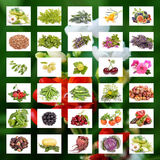 Organic Agriculture Stock Photography