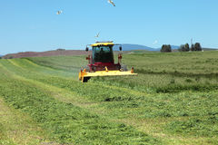 Organic agriculture & farmlands, south Oregon. Royalty Free Stock Photography
