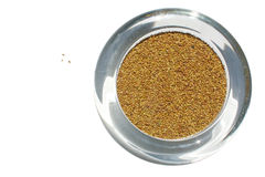 Organic Alfalfa Seeds. In glass container Stock Photography