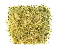 Organic Alfalfa Sprouts Isolated Stock Image