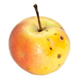 Organic Apple Royalty Free Stock Image