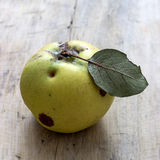 Organic apple quince Stock Photos