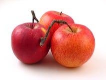Organic Apples. On white background Stock Photos