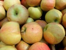 Organic Apples stock photos