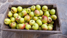 Organic apples in a basket Stock Photography