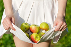 Organic apples in basket, apple orchard, fresh homegrown produce Stock Photography