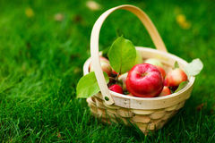 Organic apples in a basket Royalty Free Stock Photography