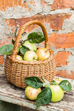 Organic apples in basket in summer grass. Fresh  in nature Royalty Free Stock Photo