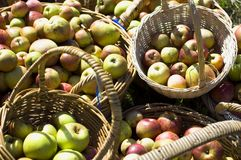Organic apples in baskets royalty free stock photography