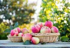 Organic apples in a baskets Stock Photo
