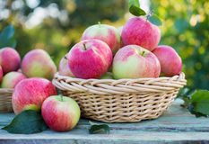 Organic apples in a baskets Royalty Free Stock Images
