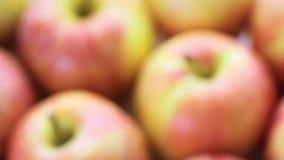 Organic apples stock video