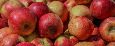 Organic apples Royalty Free Stock Photo