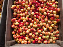 Organic apples container Stock Photo