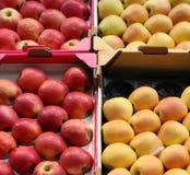 Organic apples crates Stock Photography