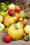 Organic apples on display in a basket Stock Photo