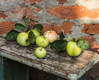 Organic apples. Fresh  in nature Royalty Free Stock Image
