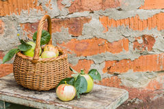 Organic apples. Fresh  in nature Royalty Free Stock Photos