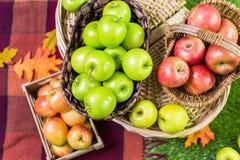 Organic apples Royalty Free Stock Image