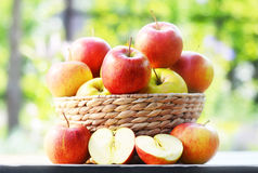 Organic apples in the garden. Balanced diet Royalty Free Stock Photography