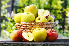 Organic apples in the garden. Balanced diet Stock Photo