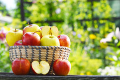 Organic apples in the garden. Balanced diet Stock Image