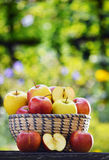 Organic apples in the garden. Balanced diet Stock Photos