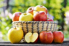 Organic apples in the garden. Balanced diet Royalty Free Stock Photo