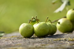 Organic Apples Stock Photography