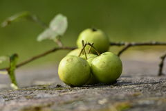 Organic Apples Stock Image