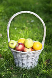 Organic apples, oranges in the Basket. Orchard Stock Photos