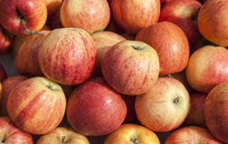 Organic apples. Organiv apples visualu are not attractive as those that are chemically threated but are much better for health reasons Royalty Free Stock Photo
