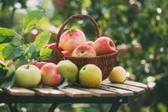 Organic apples and pears in basket on a wooden table, outdoors. Stock Photos