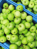 Organic apples for sale at market. Stock Images