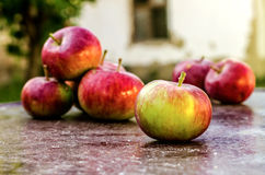 Organic Apples on Table Royalty Free Stock Photography