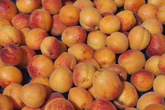 Organic apricots. Are not visually attractive like those that are chemically treated but are better for health reasons. Organic food is more expansive than mass Stock Photos