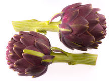 Organic Artichokes on a white background Stock Images