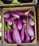 Organic Asian Eggplants Stock Image