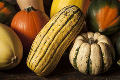 Organic Assorted Autumn Squash Royalty Free Stock Photo