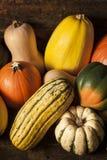 Organic Assorted Autumn Squash Stock Photography