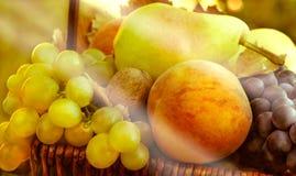 Organic autmn fruits. Organic fruits in the wicker basket Stock Image