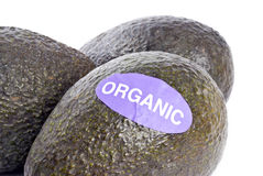 Organic Avocados Isolated on White Royalty Free Stock Photo